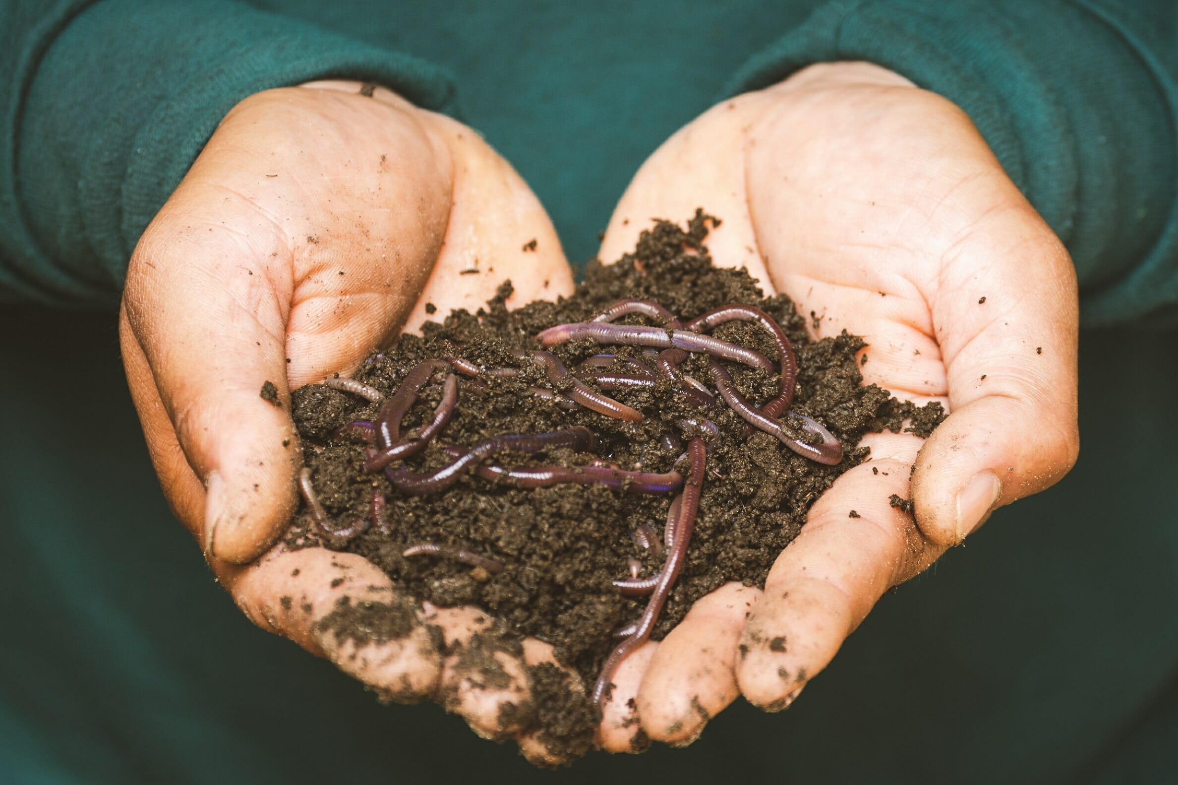 Earthworms and Redworms Compost Bin Live Together
